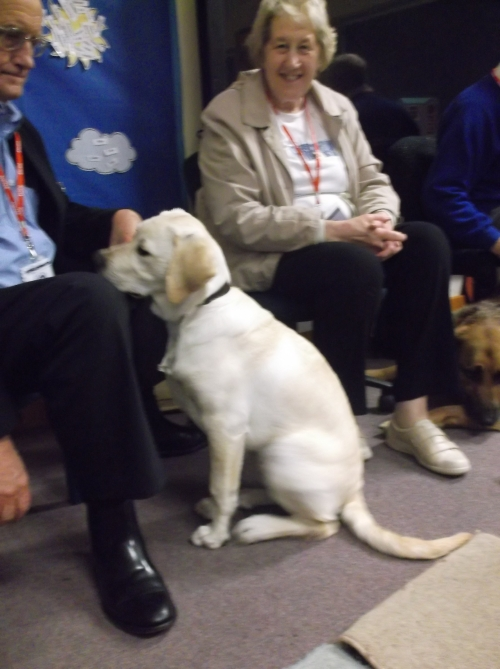 Guide Dog Puppy Vaughn socialising in Foundation class. whilst experienced dog Adam keeps a watchful eye over him.