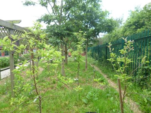 Brambleside Orchard area June 2013