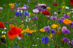 spring-meadow-2