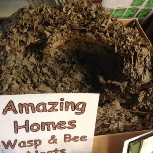 Wow! What a wasp nest - found in an attic!