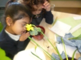 We discovered that Daffodils grow from a bulb not a seed!